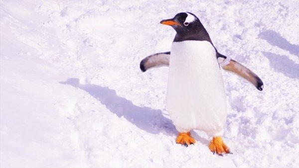 ペンギン冬